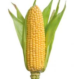 birds eye corn cobs super sweet 1kg